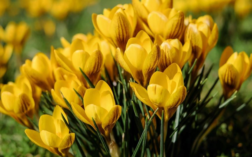 Types of Crop with Yellow Flowers
