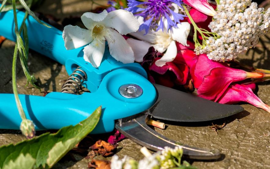 Different types of pruning shears